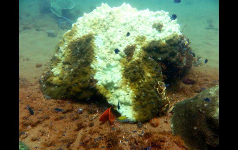 Altas temperaturas marítimas blanquean corales en Australia