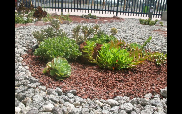 jardines secos una alternativa verde ante escasez de agua