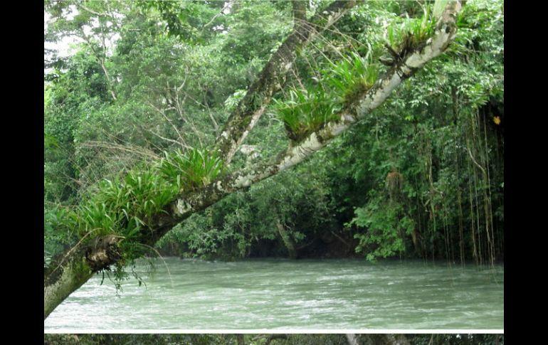 Geólogos revisan grieta en río Atoyac, Veracruz | El Informador ...