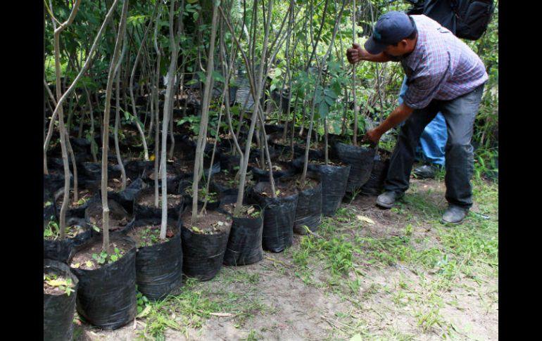 Recortan los apoyos para la proteccin de bosques  El Informador