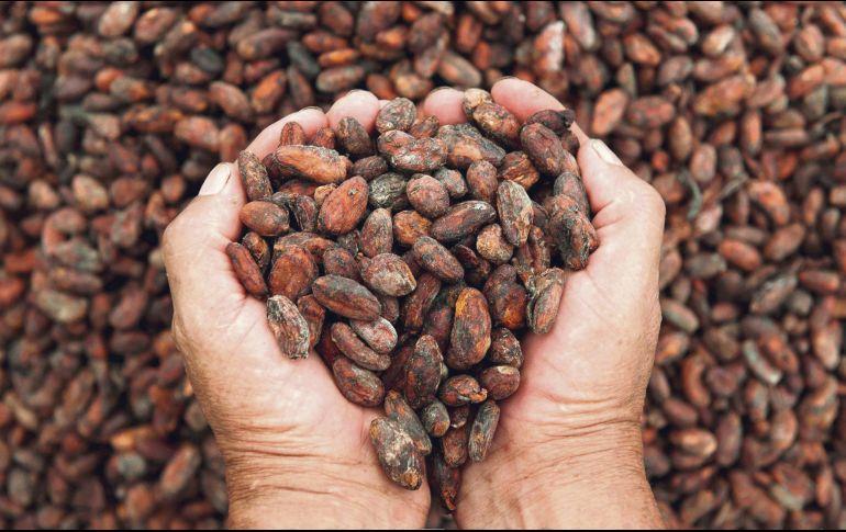 Sabores. El festival busca rescatar el valor del cacao y sus múltiples posibilidades en la gastronomía. ESPECIAL/UDEG