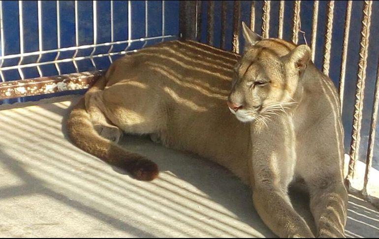 Decomisan droga y animales en zoológico abandonado