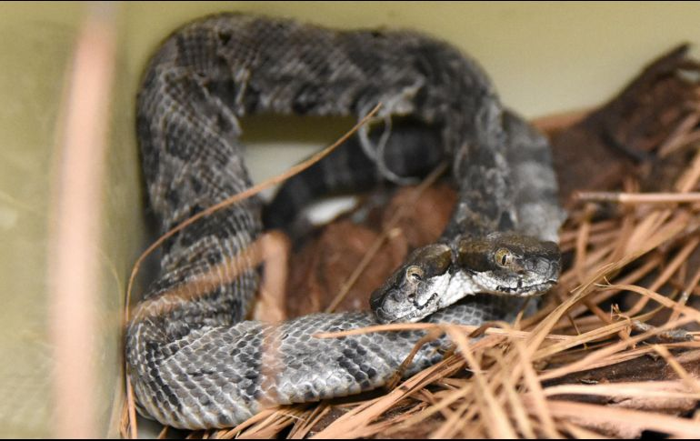 Encuentran 219 serpientes exóticas en un departamento de Once