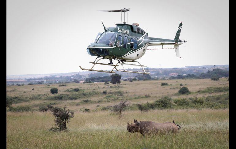 Muere el último rinoceronte negro cuando intentaban salvarlo — Kenia