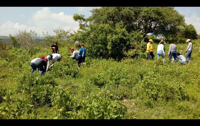 El punto de reforestación fue en Probosque La Forestal, donde se plantaron 150 árboles de guaje, guamúchil, tepeguaje, mezquite y tepame.. ESPECIAL