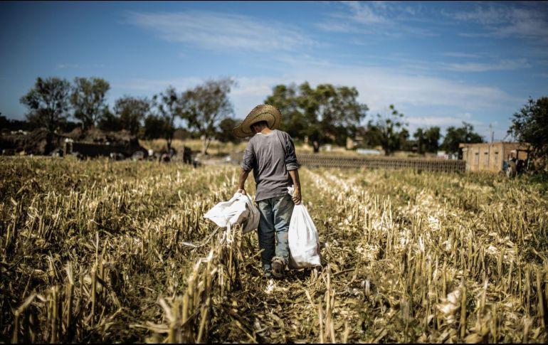 Economía mexicana avanza 1.6% en el segundo trimestre