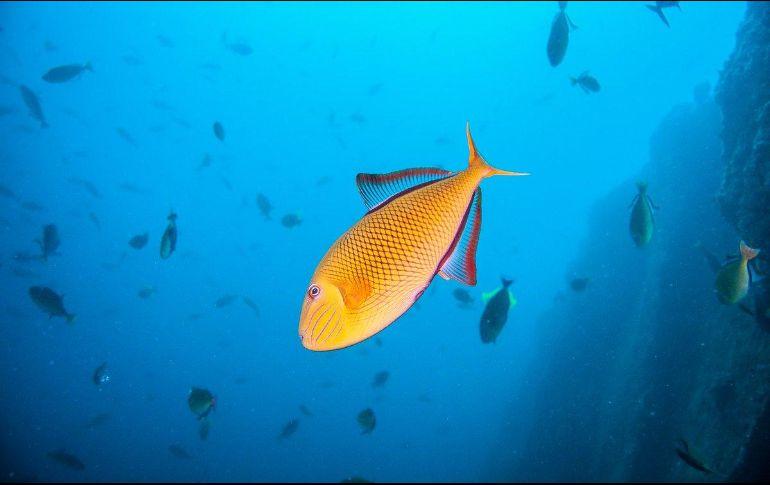 La Semarnat asegura que la temperatura de mares y océanos cambia el suministro de nutrientes de los ecosistemas marinos, la composición química del océano, los vientos y las corrientes oceánicasTWITTER / @SEMARNAT_mx