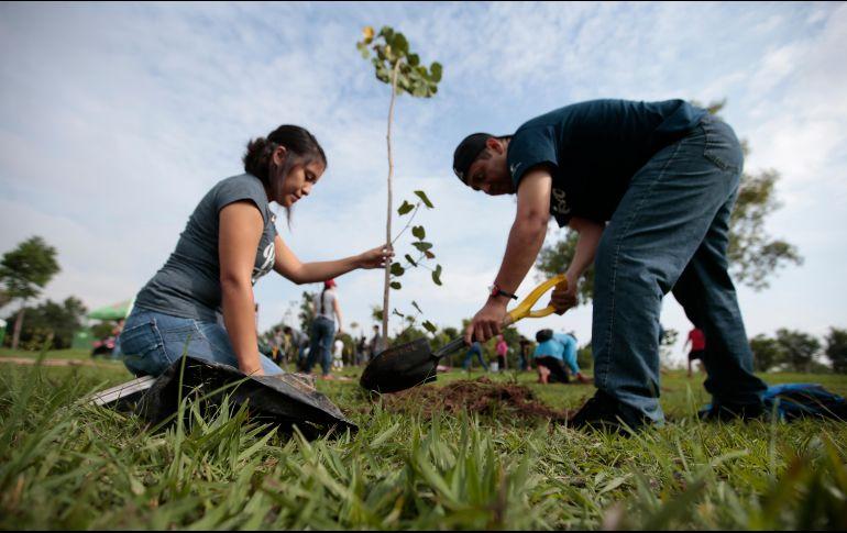 Actualmente se llevan plantados 148 mil árboles de diversas especies en toda la metrópoli. EL INFORMADOR / ARCHIVO
