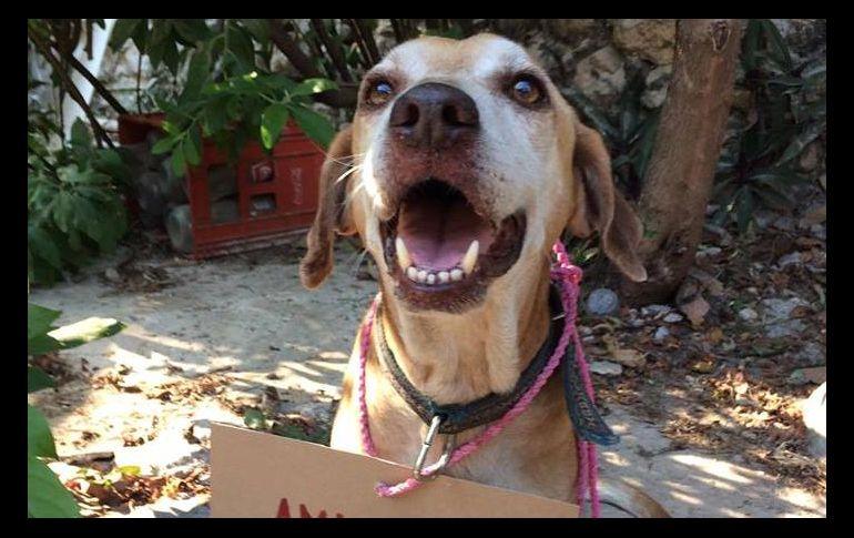 Perrito vende postres para pagar sus quimioterapias (FOTOS)