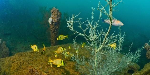 Hallan cinco arrecifes de coral en el Golfo de México
