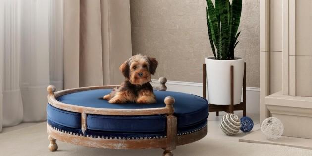 Compañías de muebles se reinventan y ofrecen productos para mascotas