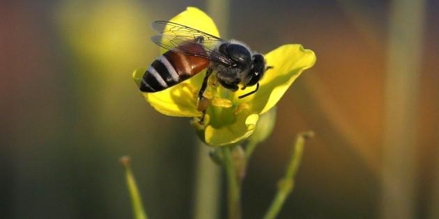 Prohíben que bomberos exterminen abejas al retirar enjambres