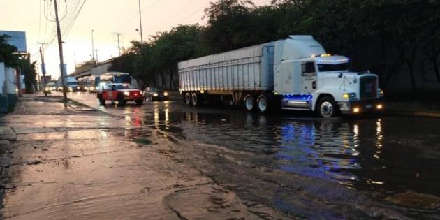 Lluvia dominical deja árboles caídos en Tlaquepaque y Guadalajara