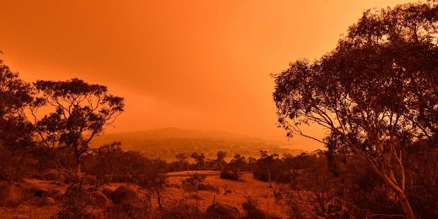 Incendios en Australia destruyeron quinta parte de los bosques
