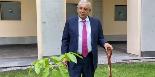 López Obrador siembra árboles tropicales en Palacio Nacional
