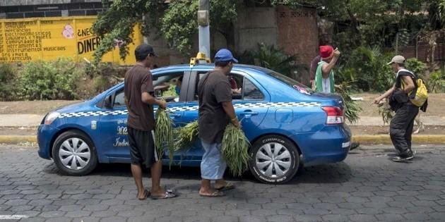 Vender eucalipto para coronavirus se vuelve delito en Nicaragua