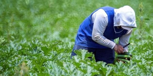Reportan muerte de otro trabajador agrícola mexicano en Canadá