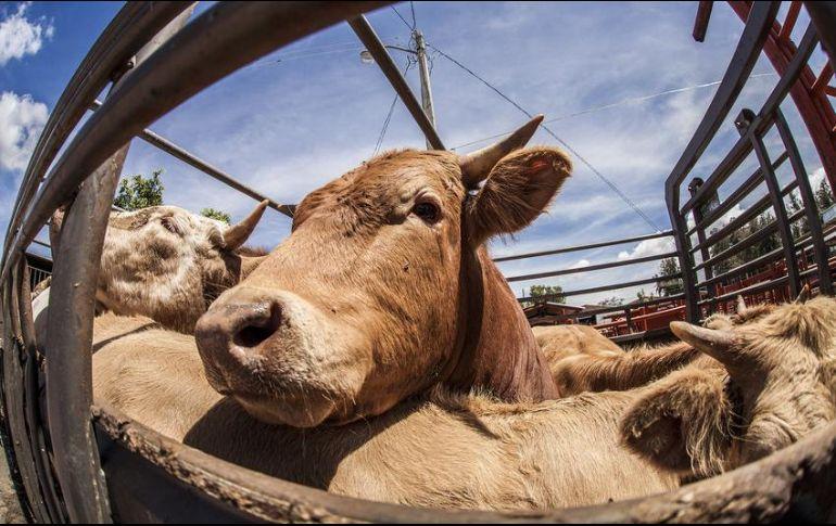 La Secretaría de Agricultura estimó que en 2020 la producción nacional de carne será de 2.1 millones de toneladas. EL INFORMADOR/ARCHIVO