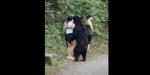 Un oso sorprende a visitantes de Chipinque, Nuevo León