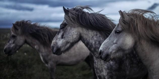 Un ola de macabros ataques contra caballos en Francia
