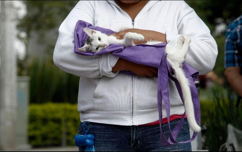 Los investigadores concluyeron que los humanos, seguidos por los hurones, y en menor medida por gatos, civetas y perros, son los animales más susceptibles a la infección por coronavirus. EL INFORMADOR / ARCHIVO