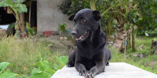 La perra que no abandona la tumba de un niño ahogado en Vietnam