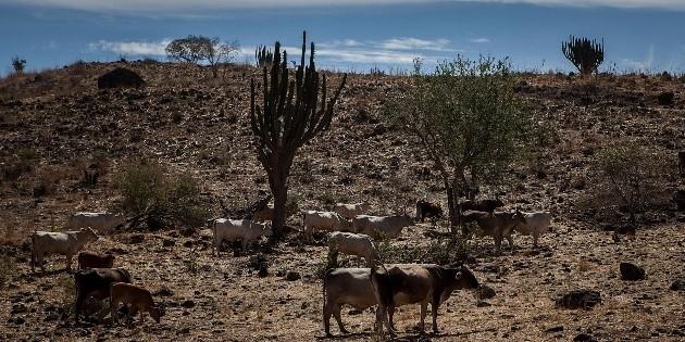 Clima en México, más cálido que el del resto del planeta en 2020