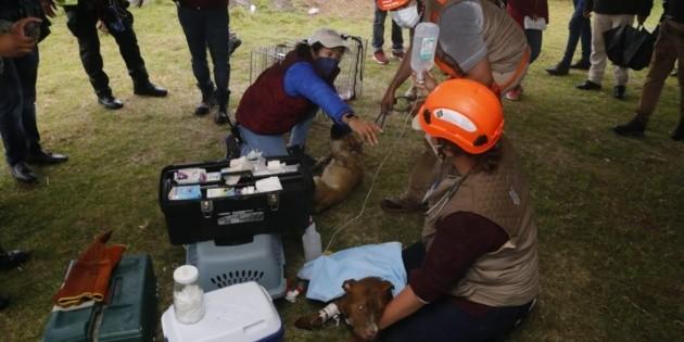 Rescatan a los perros que cayeron en socavón de Puebla