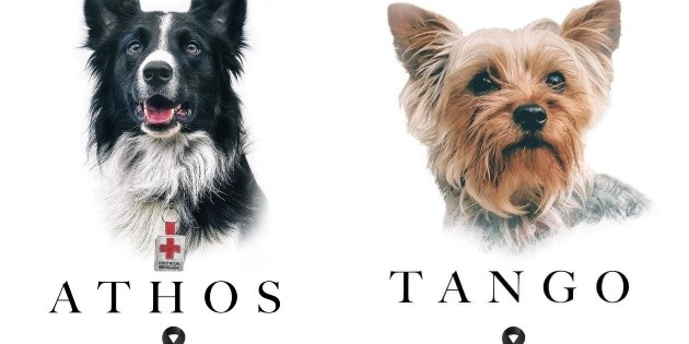 Recibiría hasta cinco años de cárcel responsable de envenenar a perros en Querétaro