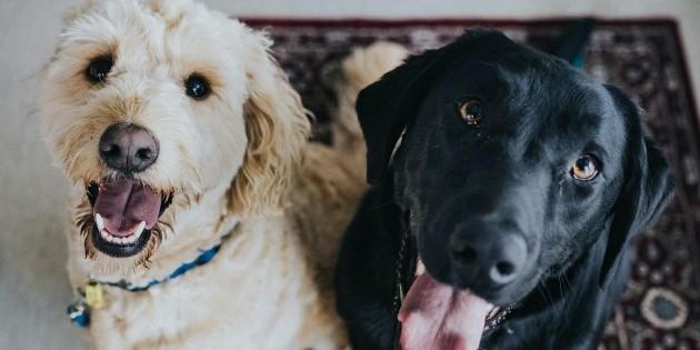 Mascotas: 10 datos curiosos sobre los perros